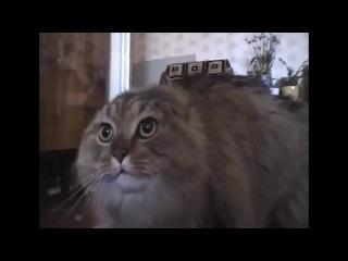 ахахахахах кошка поёт :D