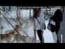 «финка» под музыку Kreed - Ты проснись,улыбнись и скажи что любишь меня:))):***....!. Picrolla