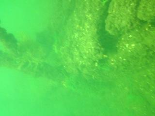 Подводный мир Валдайского озера