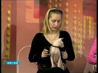 Питомник канадских сфинксов VIP Person и Eridan в прямом телеэфире