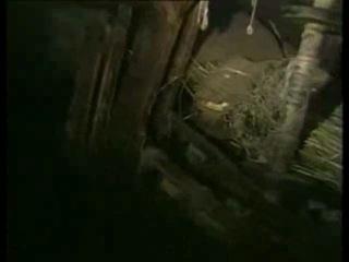 Лыковы-отшельники Сибири
