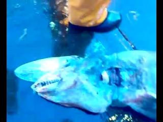 Акула Гоблин из Черного Моря