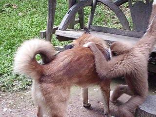 Общение животных в Тайланде