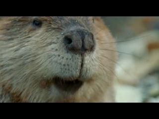 BBC: Живая природа. Ребятам о зверятах / BBC: All About Animals (Season 3, episode 4) (2006) DVDRip
