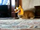 Кот встал и пошёл