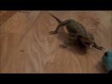 Evil lizard vs Blue snake