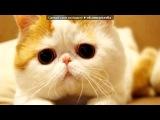 Красивые Фото fotiko.ru под музыку Аниме -Стальной Алхимик -Miho Fukuhara - наруто. Picrolla