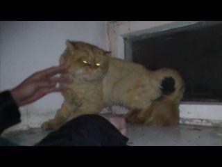 Накурили кота))))