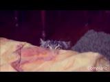 Cats Compilation. подборка  коллекция смешных видео с котами. Прикольная видео нарезка с котами