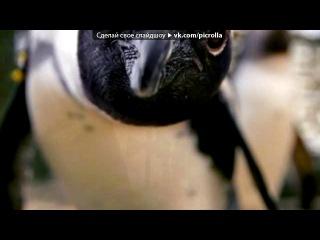 «Новый аватар для группы» под музыку О ЛЮБВИ(это песня о нас с андреем)ЯЛЮБЛЮ СВОЕГО МАСЬКУ!!!! - ветер гонит злые тучи,лепестки срывая розы,я люблю тебя так сильно,ты люби меня так сильно.я прошу не надо плакать,мне самому обидно,слезы перестаньте капать по щекам моей любимой.не прошло и мало время,ты нашла уже другого,вы девченки все такие.... Picrolla