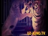 Jahongir Otajonov - Arslonman (Official HD Clip 2013)