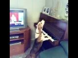 Собака играет на пианино и поет. Прикольные животные.