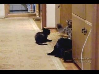 Опасное нападение злобного котенка