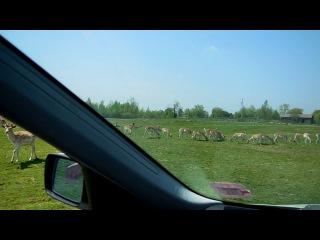 Африканское Сафари в Канаде.