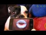 Собака напевака Cassius - I love you so (ремейк)