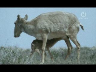BBC: Планета Земля. Будущее - Сохранение видов