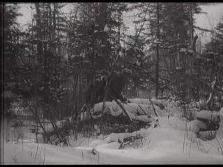 Зимняя охота на гималайского медведя. Хроника 50-х