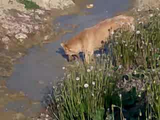 собака камнеежка3 (водолаз)