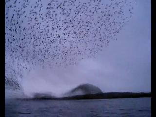 Невероятно красивое явление в живой природе!!!!!!!!!