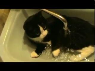 Самое смешное видео про кошек смотреть всем!!!