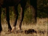 Лошади: традиции монгольских скачек, история, моменты из жизни дикой лошади,  усмирение дикой лошади, конный спорт для инвалидов
