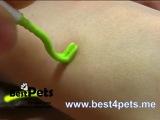 Извлечение клеща Тик Твистером (Tick Twister), практика (Best4pets.me)!