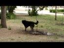 Собака в клумбе, парк саши филиппова :D 17.05.13.
