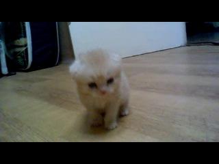 Котенок по имени Буксик!