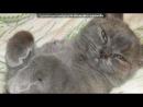 «Мой котик Жора» под музыку С Добрым Утром, любимый Котик! - Утро нач?6?