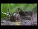 Школа выживания в мире насекомых Разнобразие дизайнов бесконечность оттенков