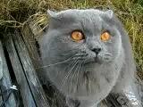 Кот говорит открой глаза))))