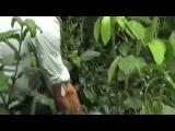 В Южной Америке поймали анаконду весом 100 кг