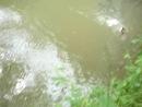 Ловля риби спінінгом на малій річці