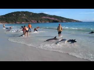 Около 30 дельфинов выбросило на берег в Бразилии, но их спасли местные жители.