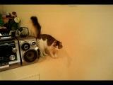 кот, котик, котэ, котейка, говорит, кот говорит, мяу, мяукает, говорящий кот, мило :)