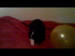 мой кот и шарик.......
