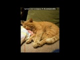 Моя самая любимая моська под музыку Александр Морозов (Кривое зеркало) - про кота!=))) Песня СУПЕРРР смешная!!!! . Picrolla