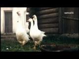 Клип  Юлия Валеева - Белый конь