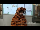 Наша Раша - Александр Родионович Бородач Детский аниматор - центр развлечений