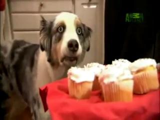 Скайрим - Техно Викинг и Собака