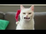 Мой кот Тима поздоравляет всех с наступающими праздниками!