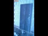 Ещё один наблюдательный кот знает как открыть дверь, нажав на ручку