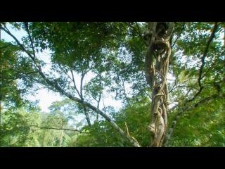 Discovery. Экватор. Серия 1. Южная Азия: Борьба за свет