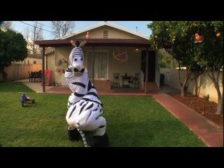 танцующая зебра