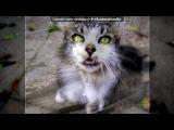 «=(» под музыку Светлана Копылова - В одном дворе уже который год жил одноглазый и безухий Кот... Picrolla