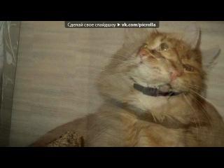«Масяня» под музыку Прикол=))))) - Про кота=))). Picrolla