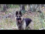 «Грей моя собака,которая умерла... Земля ей пухом(((*» под музыку ты ушёл... - 13 апреля 2011 г. умерла моя любимая собака... ;(  Микки,я тебя всегда буду любить и помнить!!!!!( P.S. Velari Naivert). Picrolla