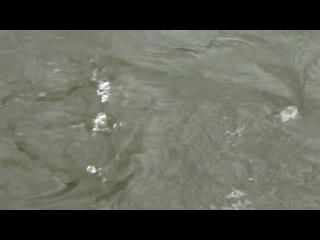 Рыбалка. Кижуч HD720