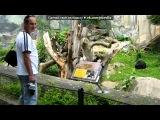 «Зоопарк в Усти над Лабем.Чехия» под музыку TONY IGY - Its Lovely! Очень красивая музыка! Транс. Picrolla
