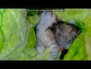 «Мой Котенок » под музыку казантип - любимый казантипчик)) ты на казан тип__)). Picrolla